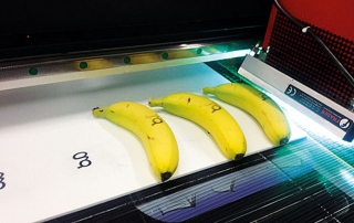 specialtryck graphoteket bananer